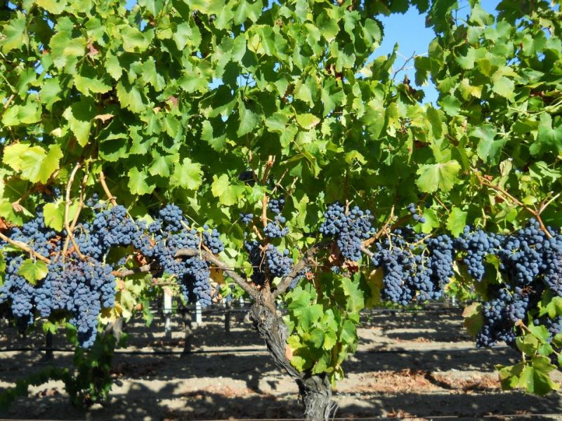 viticoltoriromangia_05