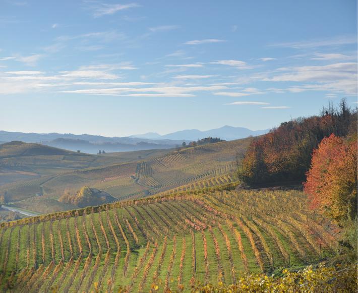 vitigno-pinot-nero